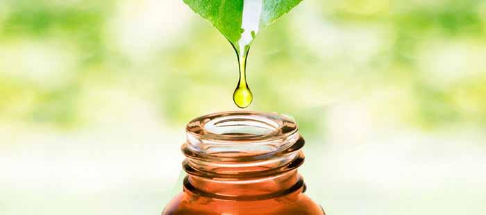 efficacia serenoa repens rimedio naturale